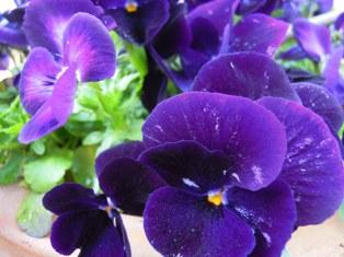 春のおりこうな花