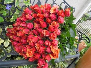 東京ミッドタウンフラワーコンクール用 赤いバラ